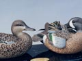 blue wing teal pair 1