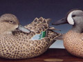 Blue-wing Teal pair 3