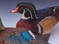 Wood Duck pair 1