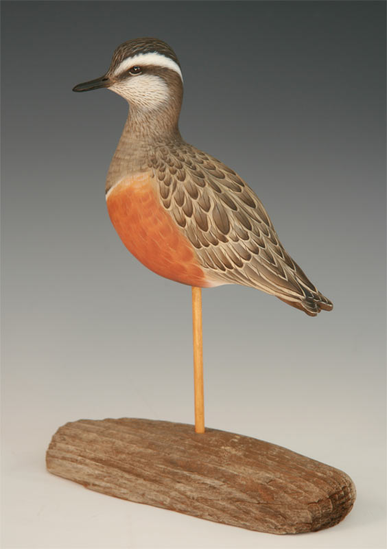 Decorative Eurasian Dotterel